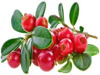 саженцы ягодных