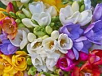 Луковицы цветов весна