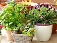 Товары для дома сада
