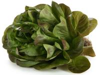 Семена овощей