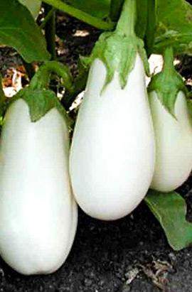 Фото-семена Баклажаны Аретуза (Aretussa RZ) F1