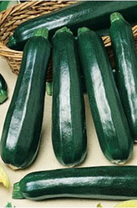 Фото-семена Кабачки Черный принц (ферм.пакет)
