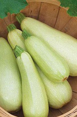 Фото-семена Кабачки Чаклун (ферм.пакет)