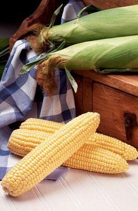 Фото-семена Кукуруза сахарная Оверленд (Overland) F1