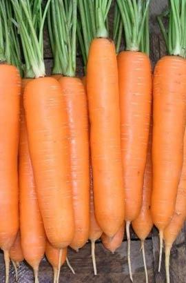 Фото-семена Морковь Дордонь (Dordogne) F1 (Фракція 1,4-1,6 г)