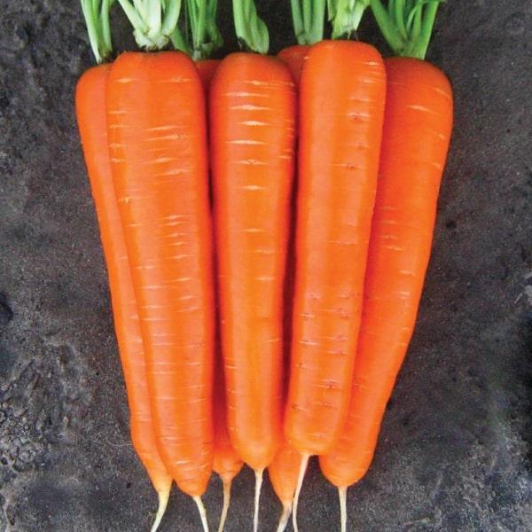 Фото-семена Морковь Лагуна F1 (1,6-1,8)