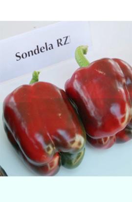 Фото-семена Перец Сондела (Sondela RZ)