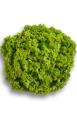 Фото-семена салат Локарно (Locarno RZ)   (не дражоване)