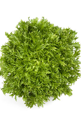 Фото-семена салат Корби  (Корбі RZ)