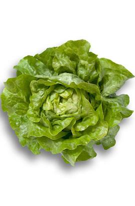 Фото-семена салат Джиска  (Jiska RZ)