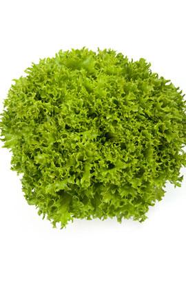 Фото-семена салат Експлор (Explore RZ)
