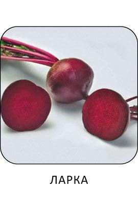 Фото-семена Свекла столовая  Ларка  (Larka RZ)