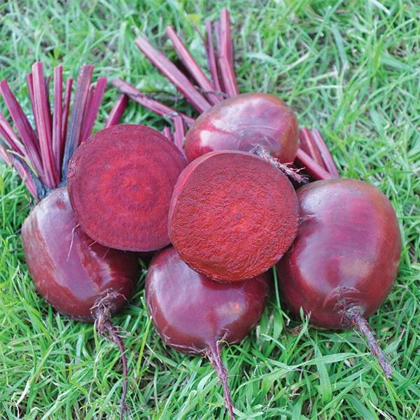 Фото-семена Свекла столовая Бонел