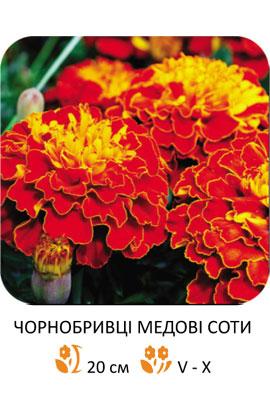 Фото-семена Бархатцы Медовые соты