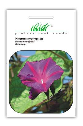 Фото-семена Ипомея Пурпурная