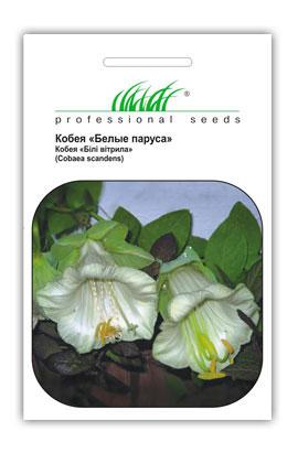 Фото-семена Кобея Белые паруса