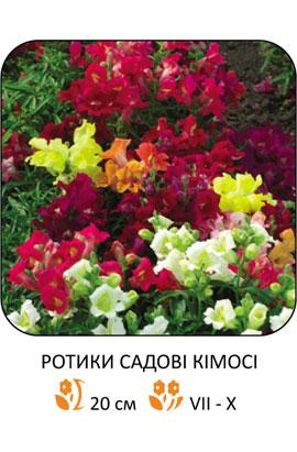 Фото-семена Львиный зев Кимоси, смесь