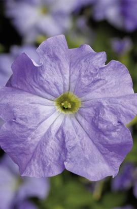 Фото-семена Петуния грандифлора TRITUNIA™Sky Blue