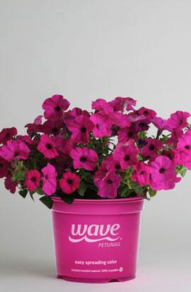 Фото-семена Петуния ампельная Tidal Wave® Purple