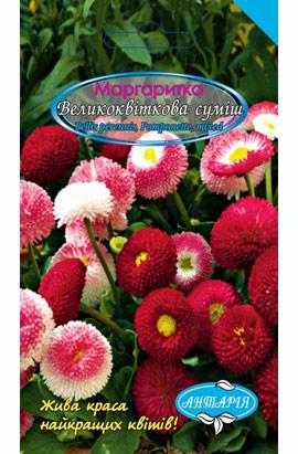 Фото-семена Маргаритка крупноцветковая, смесь