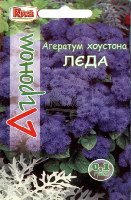 Фото-семена Агератум Леда