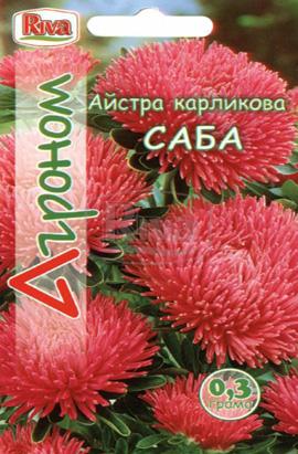 Фото-семена Астра карликовая Саба