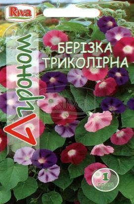 Фото-семена Березка Трёхцветная