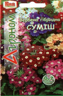 Фото-семена Вербена Гибридная Смесь
