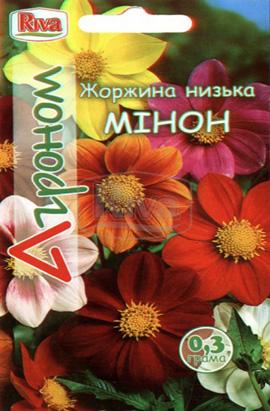 Фото-семена Георгина низкая Минон