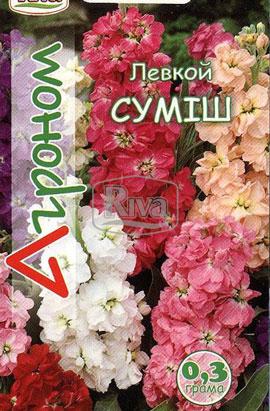 Фото-семена Левкой СМЕСЬ