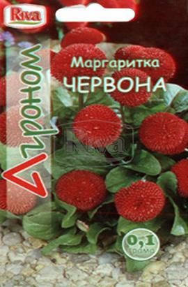 Фото-семена Маргаритка Красная