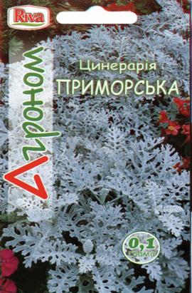 Фото-семена Цинерария приморская (Агроном)