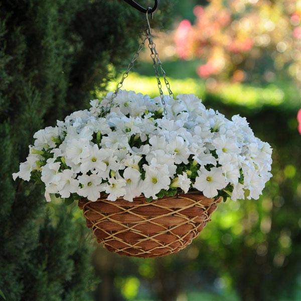 Фото-семена Петуния грандифлора Ez Rider® White