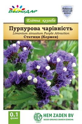 Фото-семена Кермек(статица) Пурпурова чарівність (Purple Attraction)