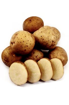 Семенной картофель  Мадлен (І репродукция)