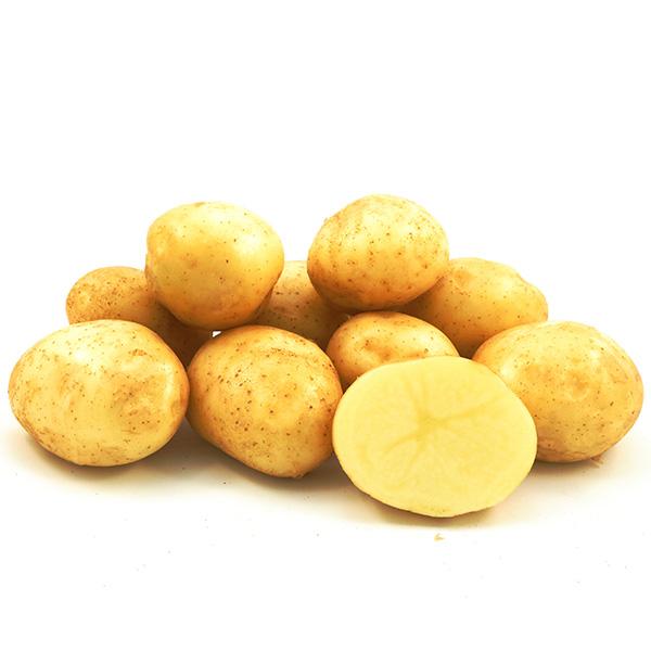 Фото- Семенной картофель Воларе (І репродукция)