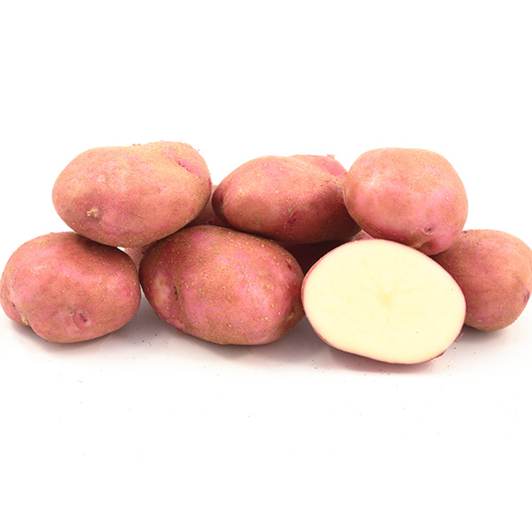 Семенной картофель  Рудольф (І репродукция)