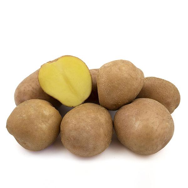 Фото- Семенной картофель Беллароза(BELLAROSA) (І репродукция)