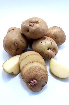 Фото- Семенной картофель Щедрик