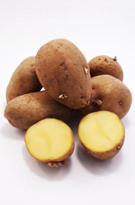 Фото- Семенной картофель Традиція (Еліта)