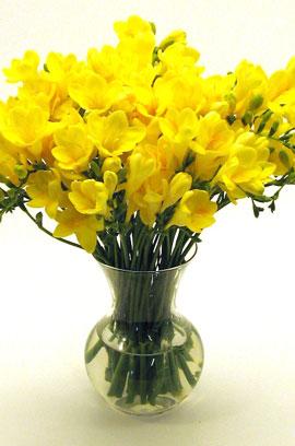 Фрезия простая  Yellow размер луков. 5/+