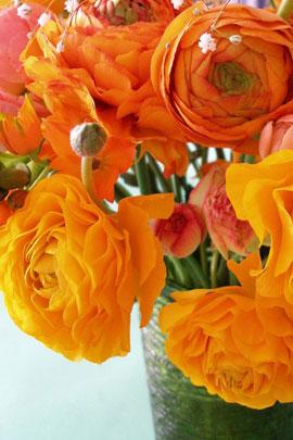 Ранункулюс (лютики)  Orange размер луков. 6/7